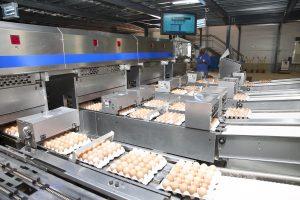 Centro de classificação e embalamento de ovos Kikovo com recurso a Moba (Nome da marca da maquinaria)